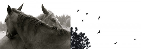 black and white, horses, birds