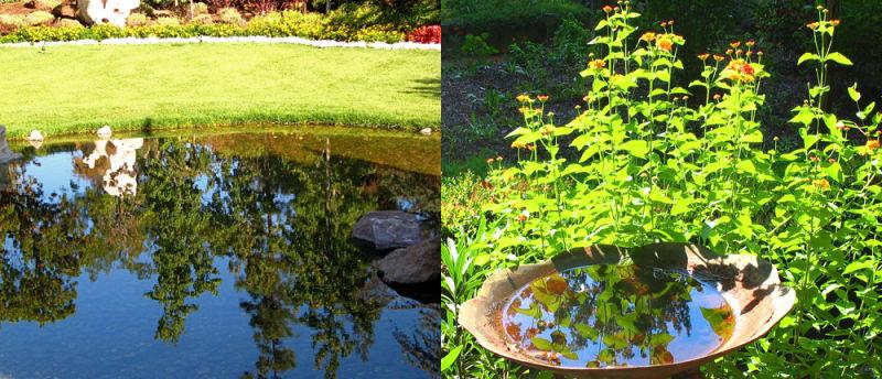 reflection, garden, green, water, pond, bird bath