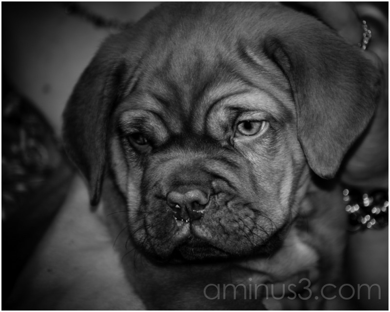 Untitled Puppy Picture