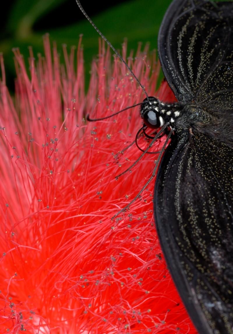 Macro of a butterfly