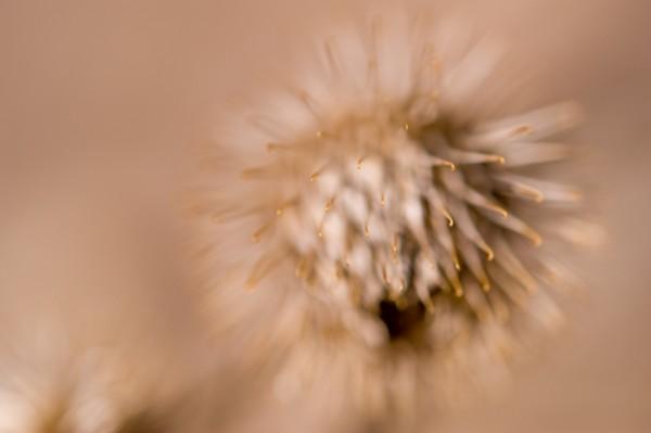 Selective focus shot of a burr