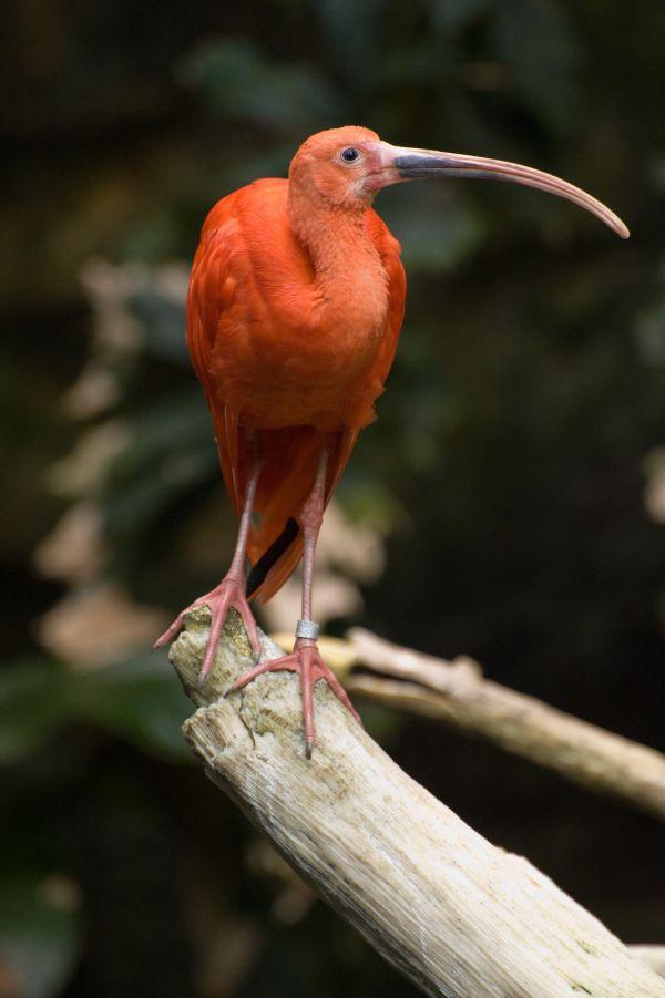 Bird at Biodome