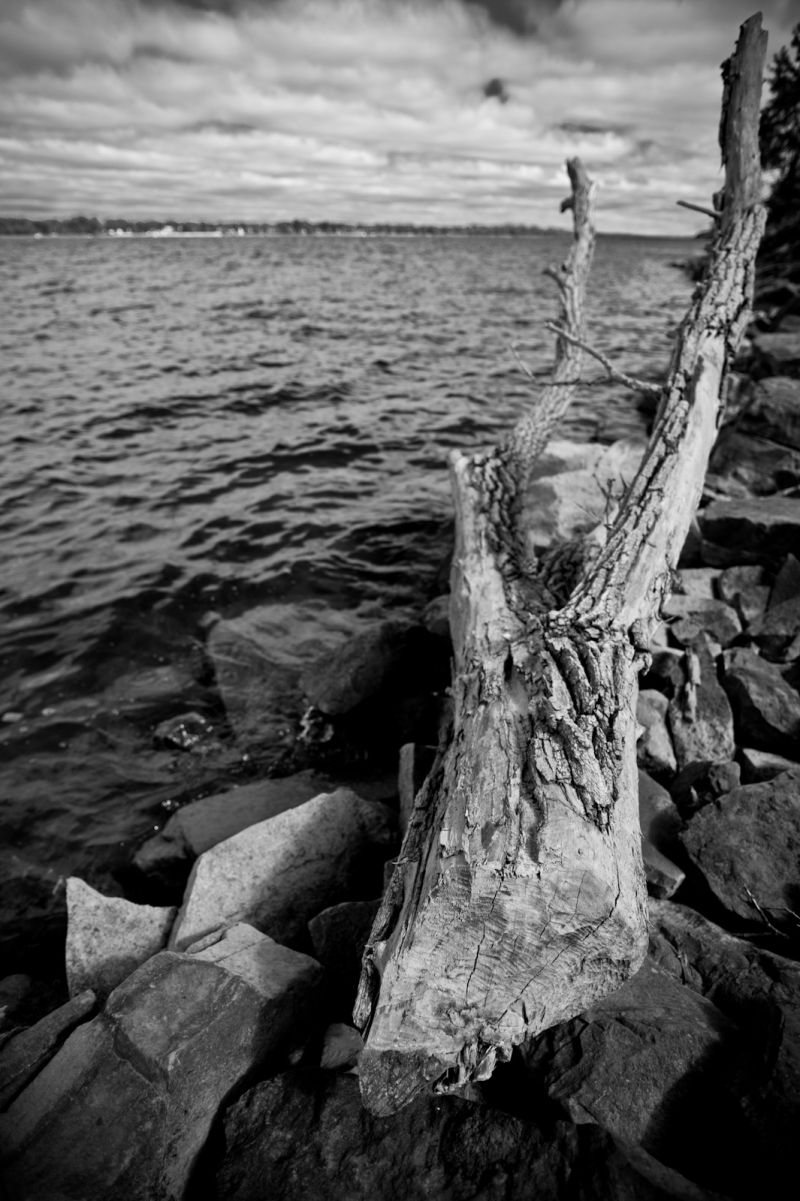 Driftwood along the Ottawa River