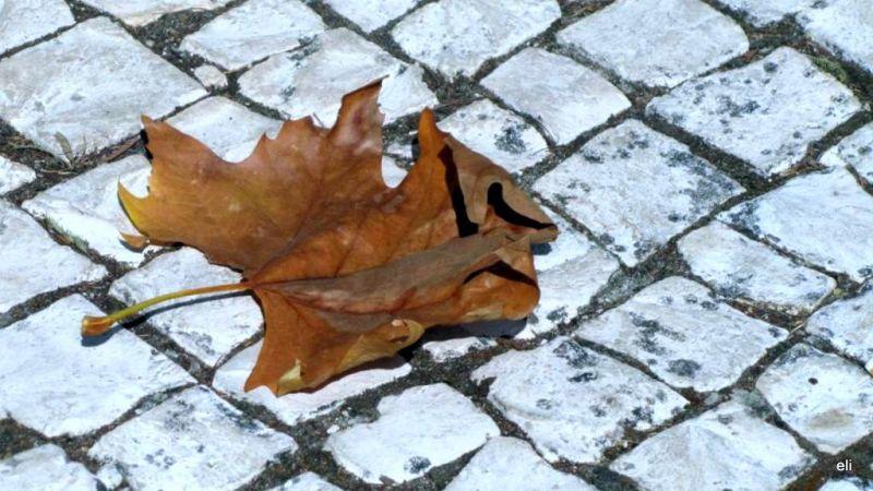 """""""les feuilles mortes se ramassent à la pelle"""""""
