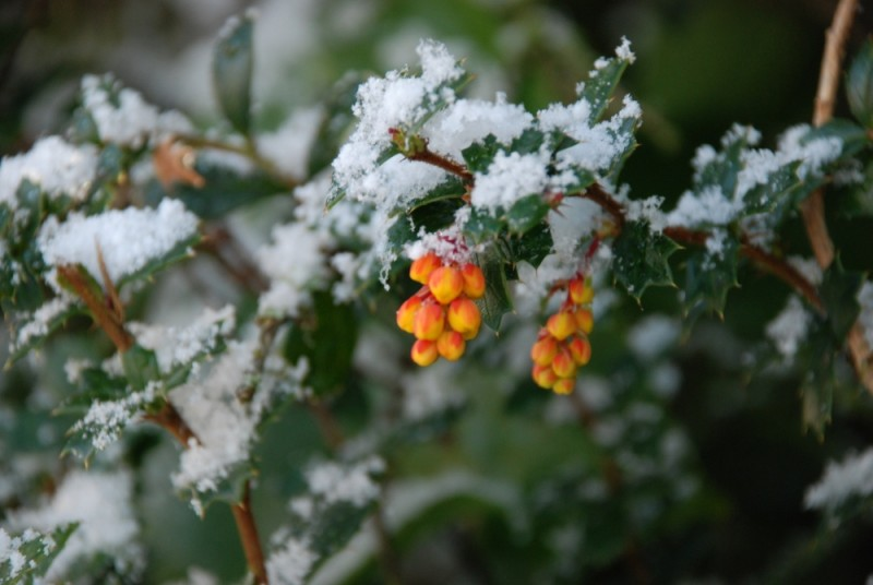A bright orange berry adds colour to an icy scene