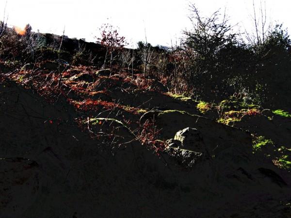 The sun casts long shadows over a hill.