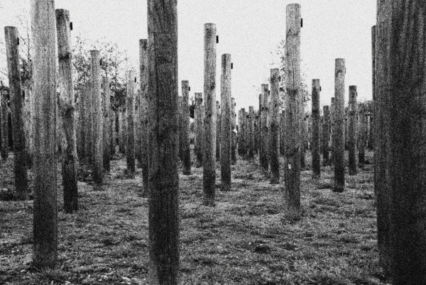 Densely packed posts form a forest.