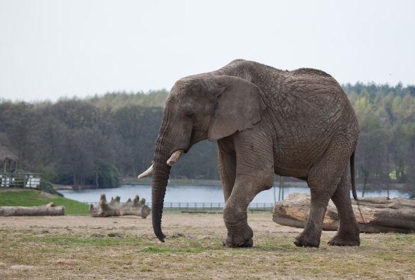 Loan Elephant