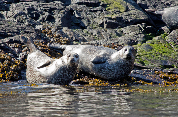 Seal's
