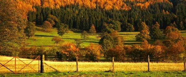 Autumn morning, somewhere in Scotland