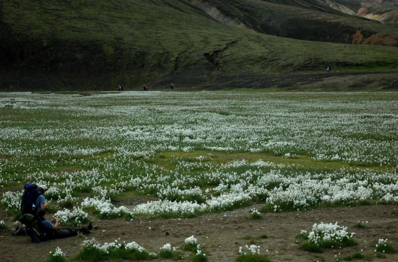 Iceland #19