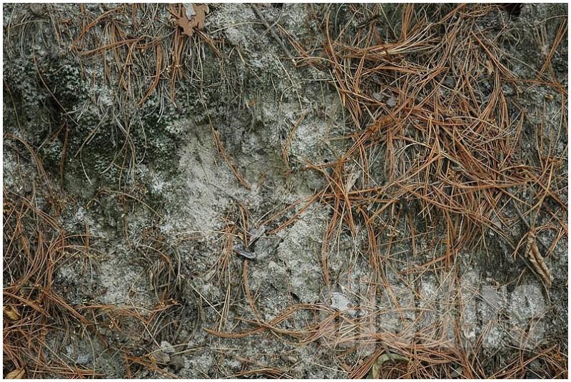 tangled vines at starved rock, utica, illinois
