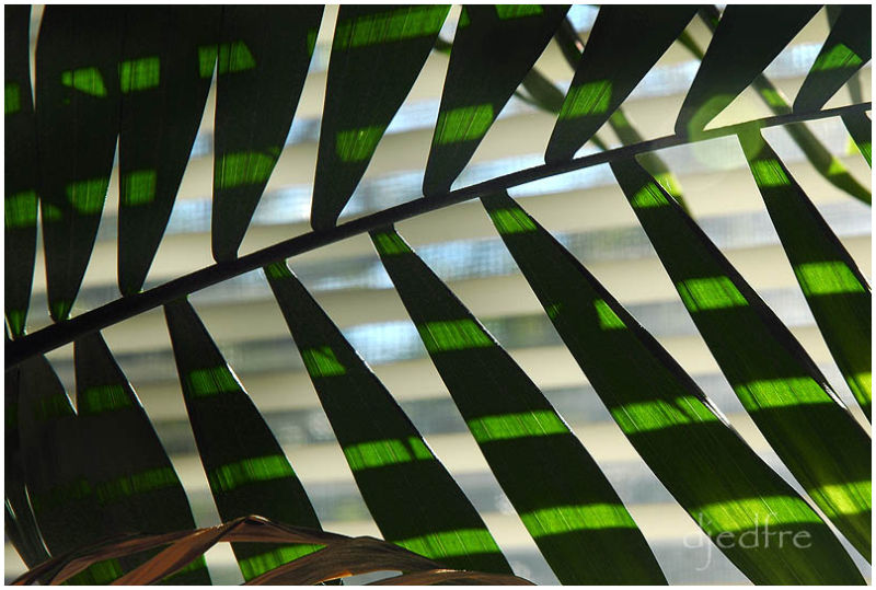 fronds and blinds