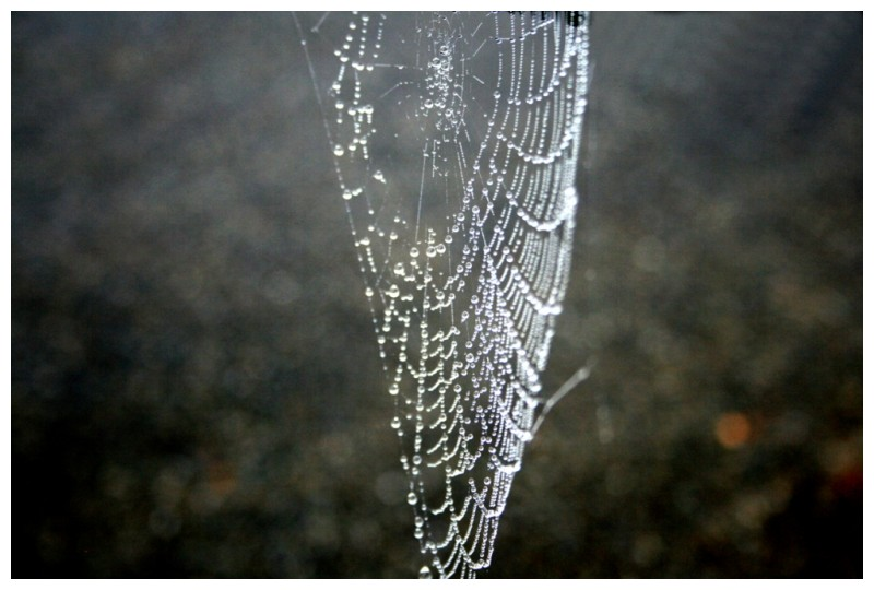 Water Beads on Spider web