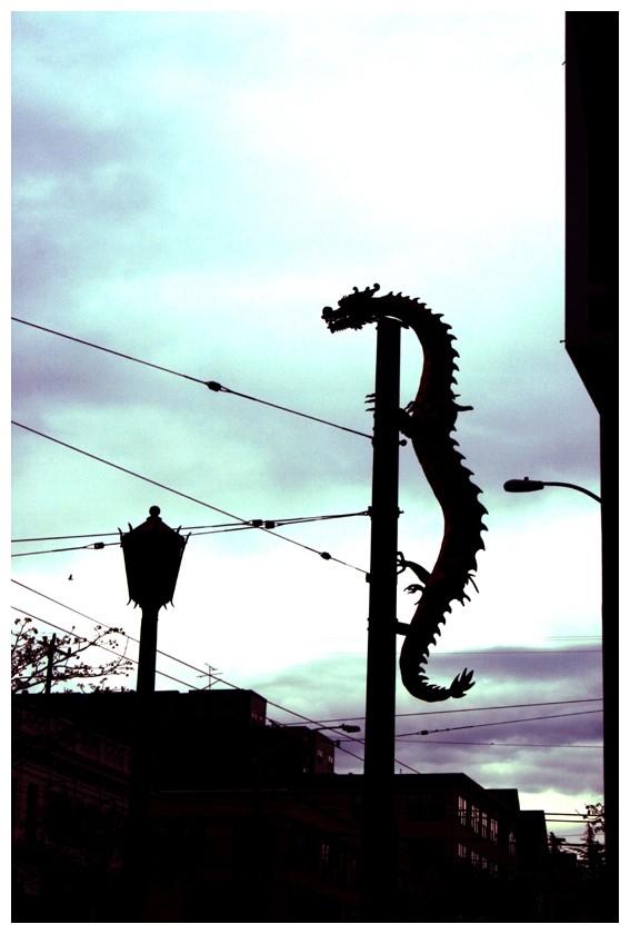 Not a Lizard...