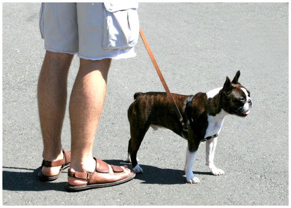 Man & Pug