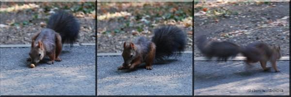 Squirrel in Hereastrau park, Bucharest, Romania