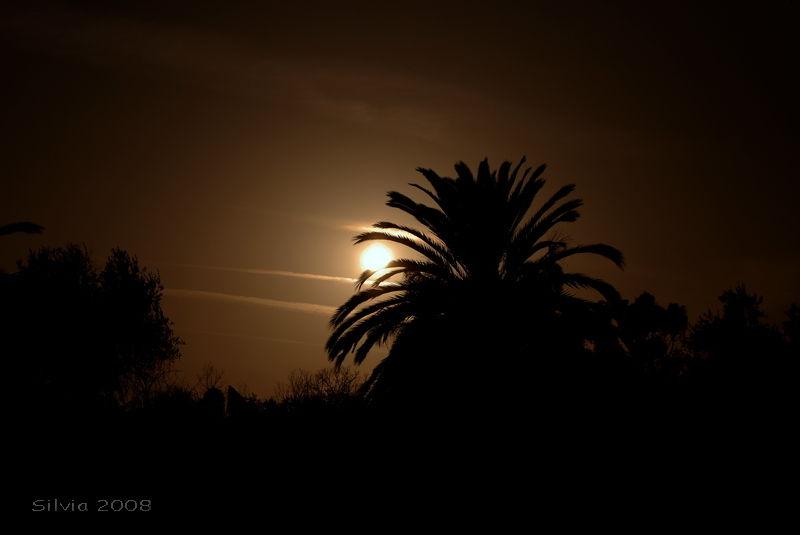 corfu kerkira greece sunset palmtree