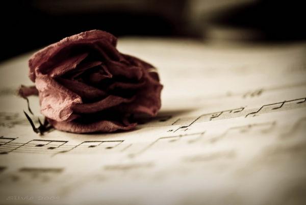 Dead rose on music sheet