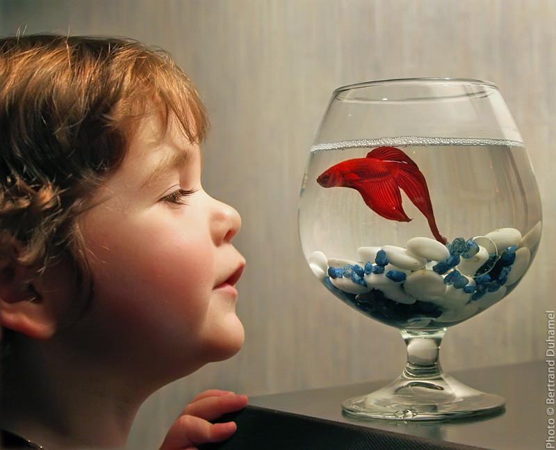 Juliette et le poisson