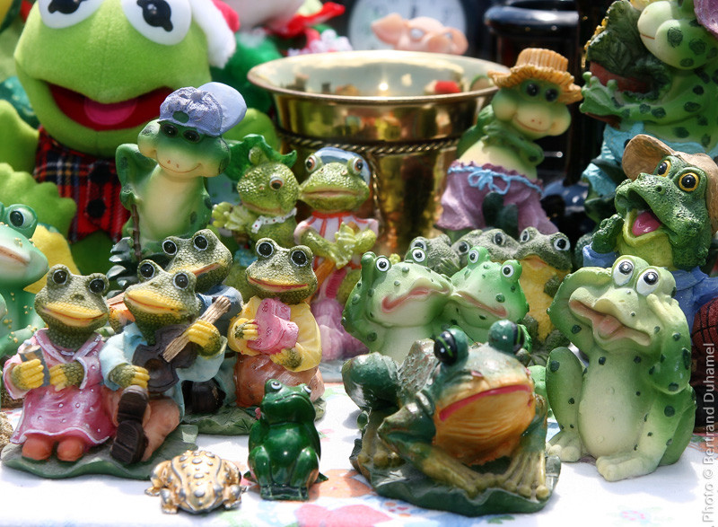 frog grenouille bertrand duhamel