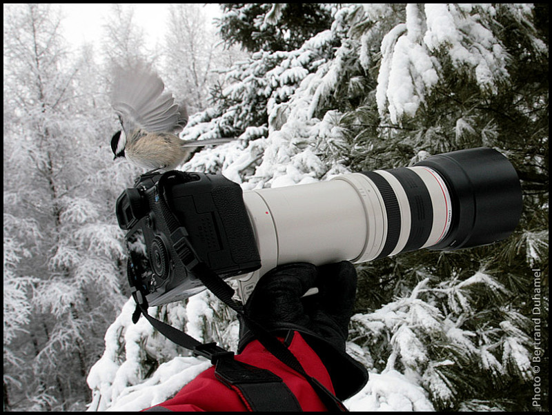 Allez, on regarde le petit oiseau et on sourit !