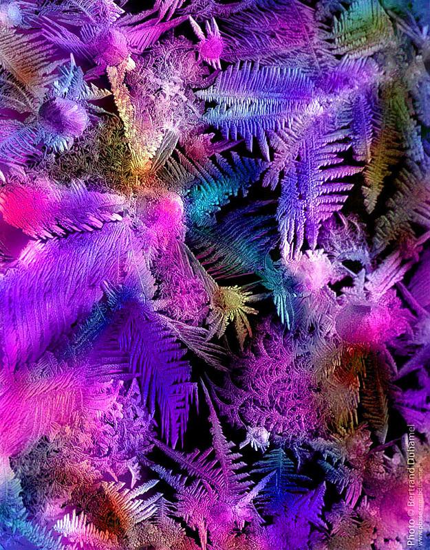 Pandora's forest