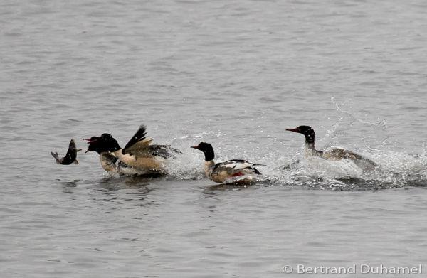 A fishy race !