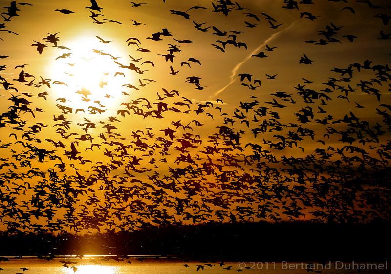 Migration - Le grand départ