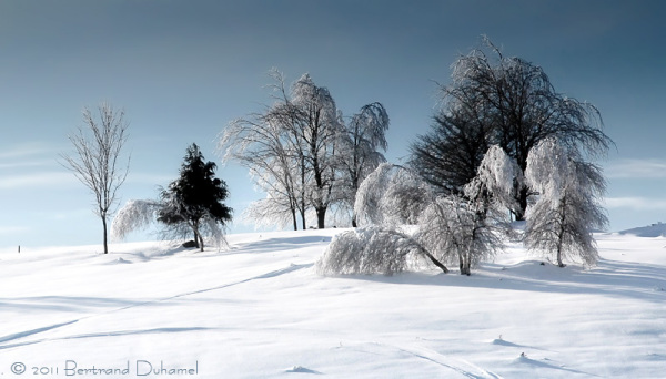 A peaceful winter scene