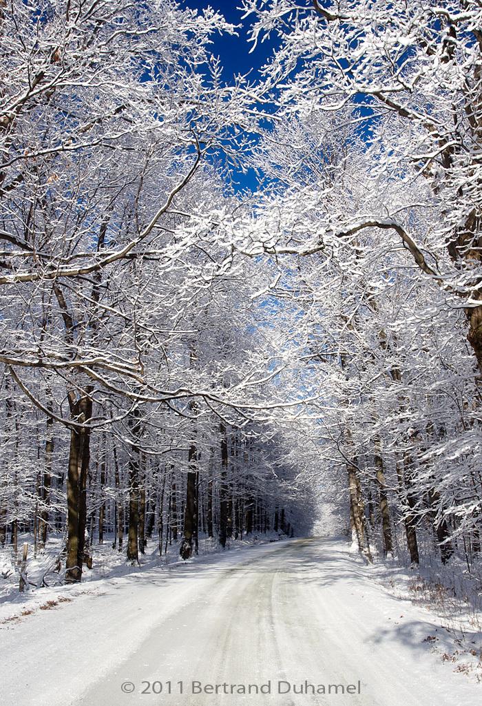 Un Noël blanc - A white Christmas