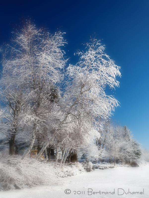 Bonne Année 2012 ! - Happy New Year 2012 !