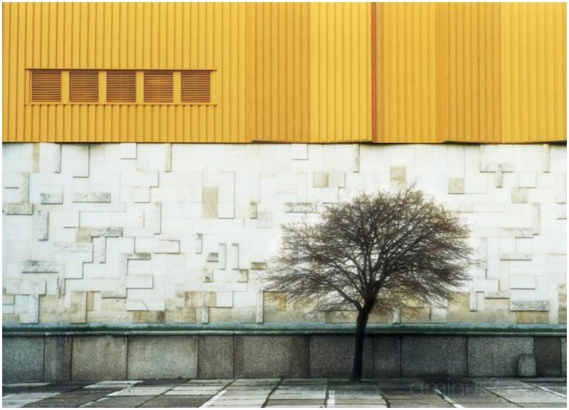 Baum vor Halle