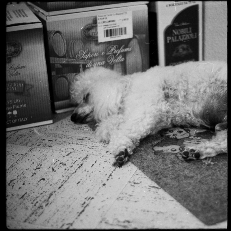 Sleepoverdog [Frontend]