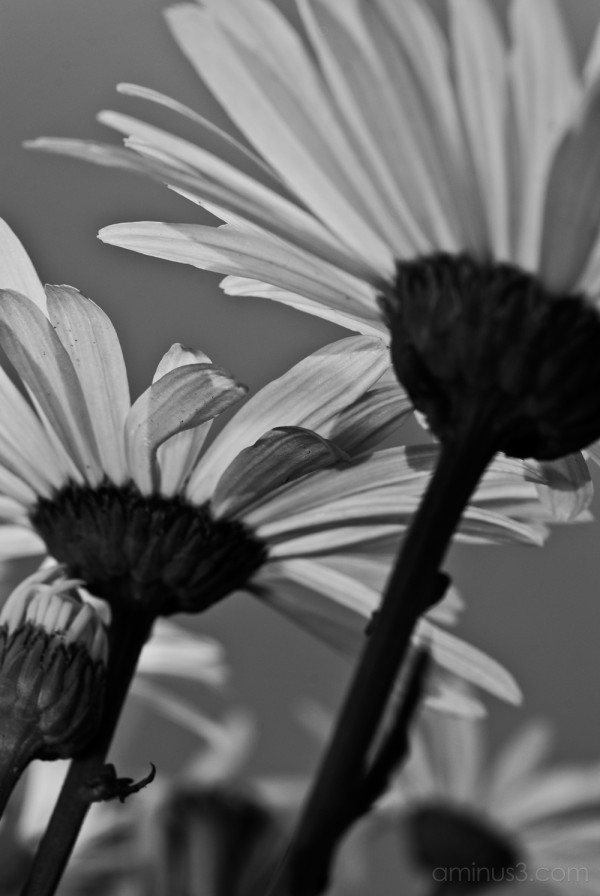 Flowers at Xochimilco, Mexico City.