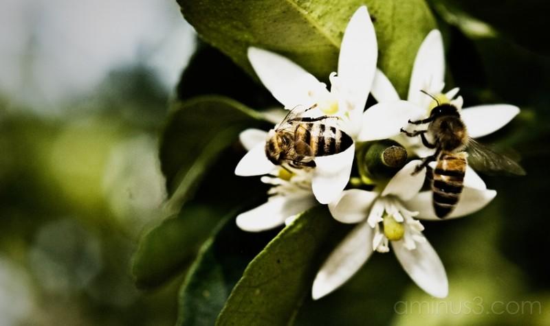 Beezy Spring in Temixco, Morelia