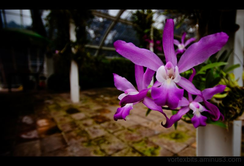 An orchid at the Botanical Gardens of Mexico City.