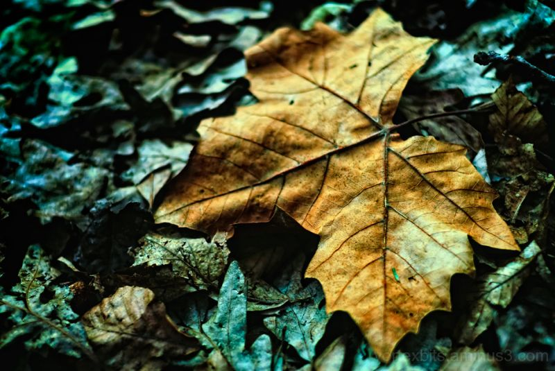 Color contrasting a leaf.