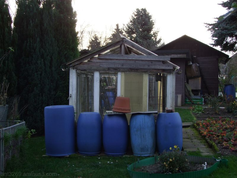 Silly Shed