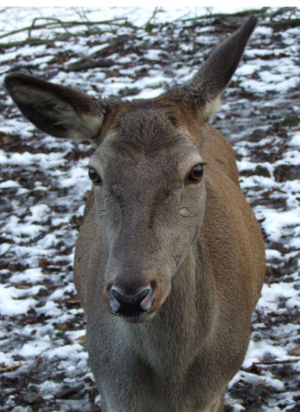 Oh Deer !!