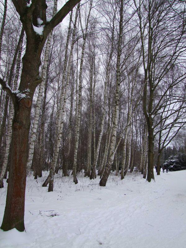 Return of the snow