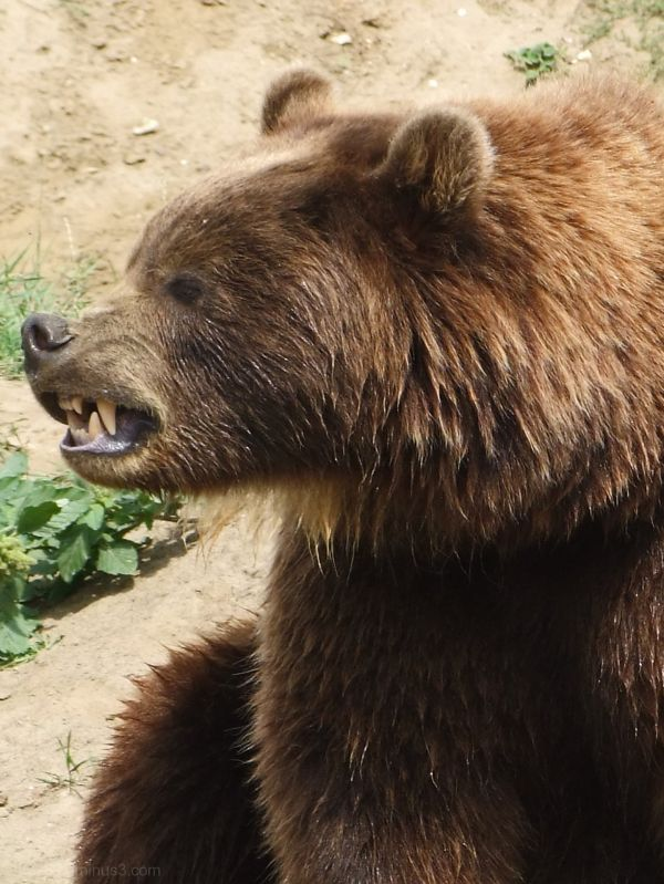 "Won´t you be my ""Teddy Bear"""