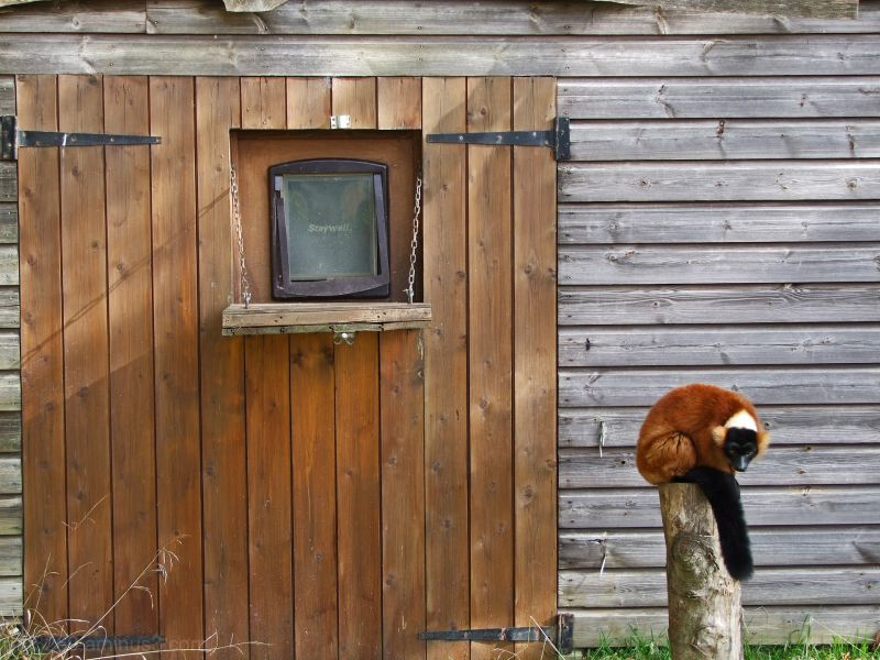 Cute and Fluffy #6 (with a shed !!)