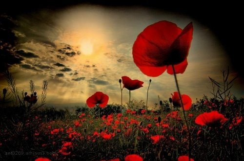 WE WILL REMEMBER THEM !!