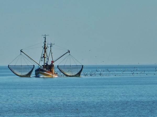 Shrimp fisher