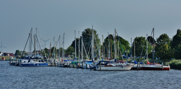 Yachts and trees