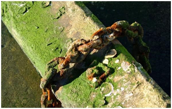 Harbour find