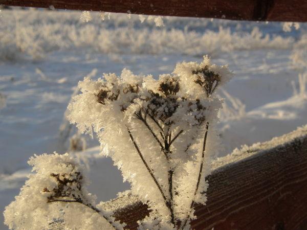 kuura talvi