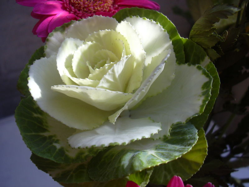 Mikes Birthday Flowers with Cabbage