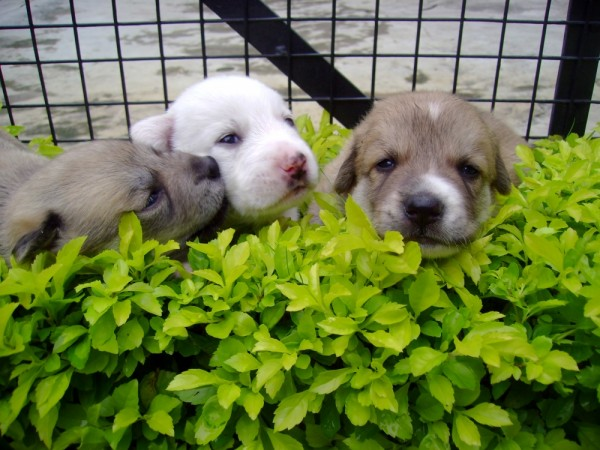cute puppies,dogs,lovely,beautiful,preety,pups